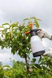 Fongicide de pulvérisation d'arbre fruitier de feuilles images stock