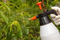 Fongicide de pulvérisation d'arbre fruitier de feuilles photos stock