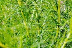 Fonkel regendruppel op het lange groene blad Stock Afbeelding