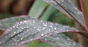 Fonkelende regendruppels Stock Fotografie