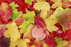 Font of autumn leaves Stock Image