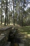 Fontain в лесе стоковая фотография rf