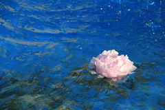 Fontaine d'eau bleue lumineuse avec la fleur de flottement rose Photo stock