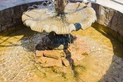 Fontaine d'eau et la fleur cupulaire Photographie stock