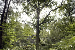 Fontainebleau forest Royalty Free Stock Photo