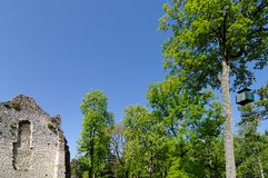 Fontainebleau forest royalty free stock image