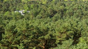 Fontainebleau forest royalty free stock photos