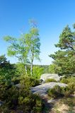 Fontainebleau forest Stock Image