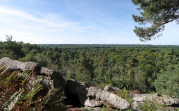 Fontainebleau forest Stock Photos