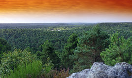 Fontainebleau forest Royalty Free Stock Images