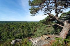 Fontainebleau Forest Stock Photography