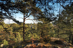 Fontainebleau forest royalty free stock photography