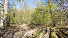 Fontainebleau forest in spring season Stock Images