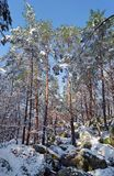 Fontainebleau forest under snow. The Apremont gorges in Fontainebleau forest Stock Images