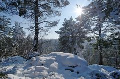 Fontainebleau forest under snow Stock Photo