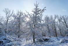 Fontainebleau forest under snow. The Apremont gorges in Fontainebleau forest Royalty Free Stock Image
