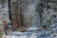 Fontainebleau forest under snow Stock Images