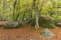 fontainebleau skog Arkivbild