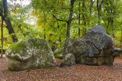 fontainebleau skog Arkivfoton