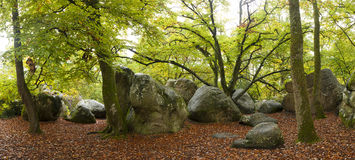 fontainebleau skog Royaltyfri Foto