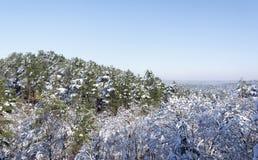 Fontainebleau skog i vintersäsong royaltyfria bilder