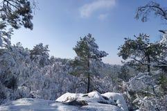 Fontainebleau skog i vintersäsong arkivfoto