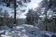 Fontainebleau skog i vintersäsong arkivbilder