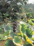 Fontaines chez Tirta Gangga, Bali photographie stock libre de droits