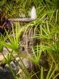 Fontana asiatica, Tailandia Fotografia Stock