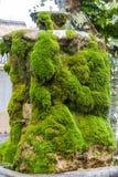 Fontana in Cadenet Fotografia Stock