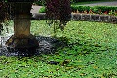 Fontana con le ninfee Fotografie Stock