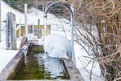 fontana congelata nelle alte montagne Fotografia Stock