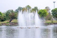 Fontana del lago nel giardino reale Chiangmai, Tailandia della flora immagine stock libera da diritti
