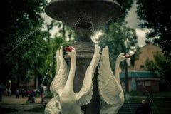 Fontana dell'oca Immagini Stock Libere da Diritti