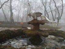 Fontana dell'oca Immagine Stock