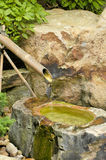 Fontana di bambù Immagini Stock