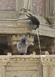 Fontana Maggiore fotografia de stock royalty free