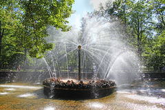 Fontana in sole di Peterhof Immagini Stock Libere da Diritti