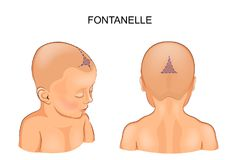 Fontanel in the infant Stock Photo