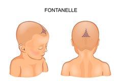 Fontanel nell'infante illustrazione vettoriale