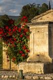 Fontanna z czerwonymi różami Obrazy Royalty Free