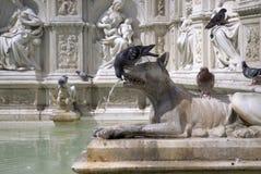 fonte喷泉gaia ・意大利鸽子siena 库存照片