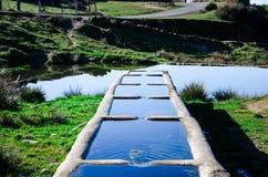 Fonte bebendo da água para animais na natureza Imagens de Stock