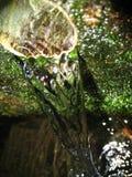 Fonte d'acqua Fotografia Stock Libera da Diritti