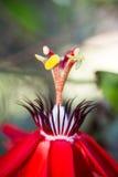 Fonte da flor Imagem de Stock