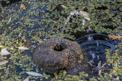 Fonte de água com plantas aquáticas fotos de stock