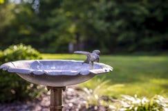 Fonte de água do pássaro Fotografia de Stock
