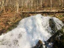 Fonte de fluxo Tschuder com cachoeira e mola do c?rsico ou Karstquelle Tschuder da fonte de ?gua, Schwende foto de stock royalty free