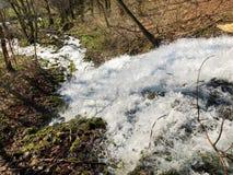 Fonte de fluxo Tschuder com cachoeira e mola do c?rsico ou Karstquelle Tschuder da fonte de ?gua, Schwende fotografia de stock