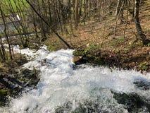 Fonte de fluxo Tschuder com cachoeira e mola do c?rsico ou Karstquelle Tschuder da fonte de ?gua, Schwende fotografia de stock royalty free